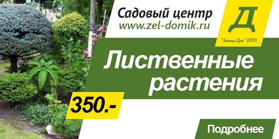 Садовый середина - Зеленый Дом (ООО) - Лиственные растения