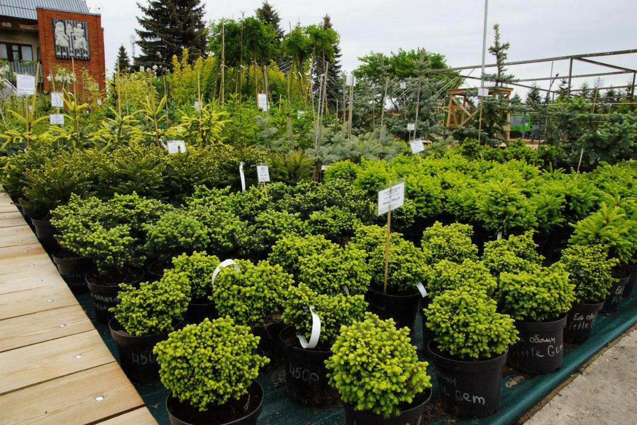 «Садовый центр» - Зеленый Дом (ООО) - Питомник растений