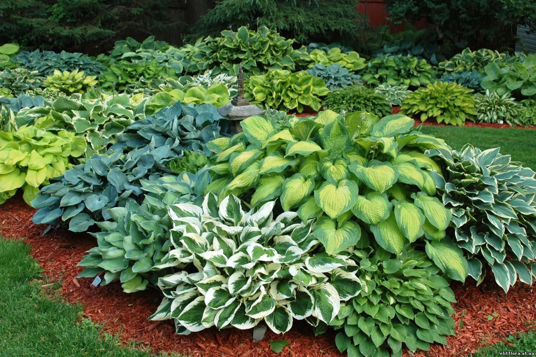 Садовый носитель - Зеленый Дом - Многолетние растения