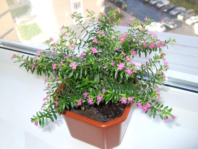 Садовый средина - Зеленый Дом - Горшочные растения