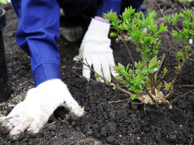«Садовый центр» - Зеленый Дом (ООО) - Работы в соответствии с озеленению