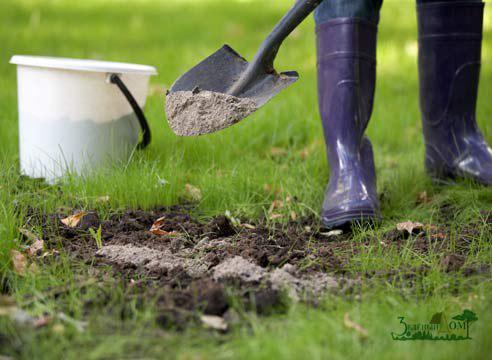 «Садовый центр» - Зеленый Дом (ООО) - Уход из-за растениями